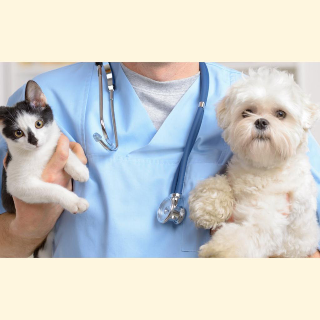 Curso de Veterinaria con Rápida Salida Laboral